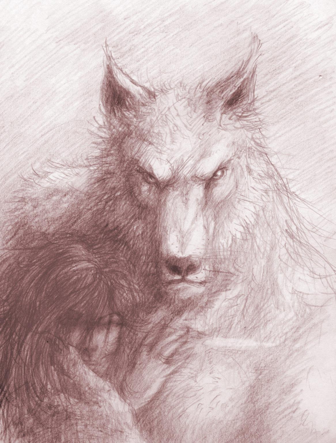 Loup garou couleur sépia avec regard insistant